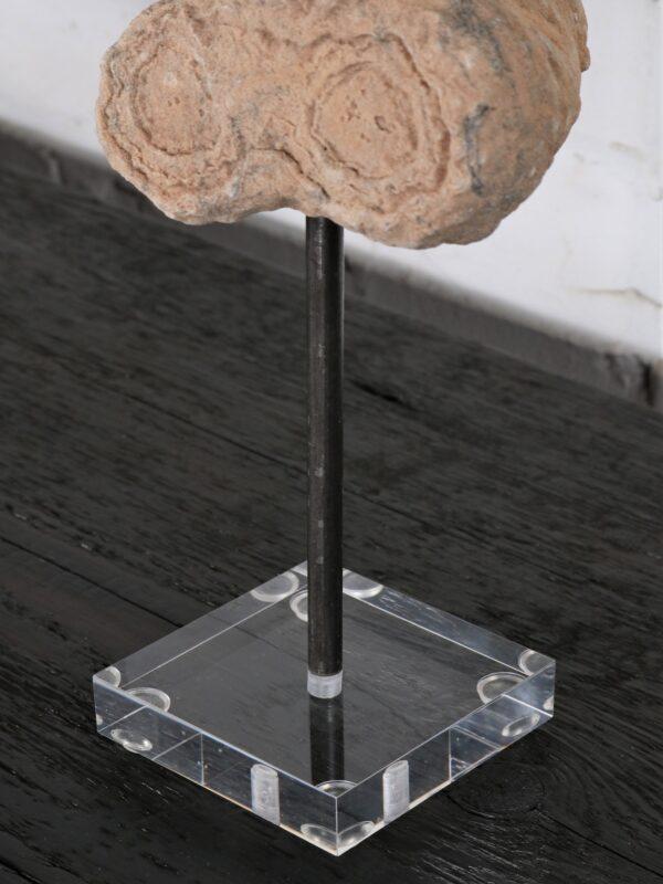 Strombolite Fossil on Acrylic Base