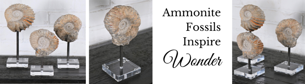 Ammonite fossils on Lucite bases for home décor
